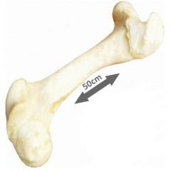Hovězí kost BÍLÁ 1ks cca 50cm